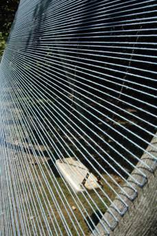 Harp by Victoria Burton-Davey